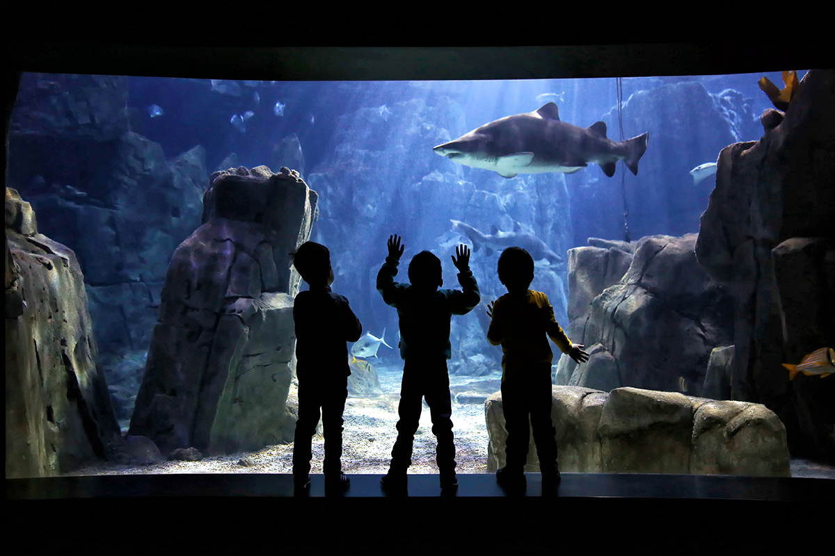 #49 —Florya – 