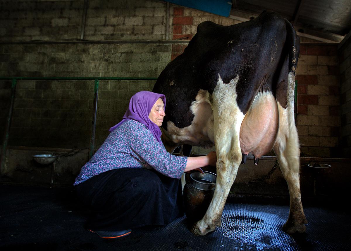 #132 —Büyükçekmece –  Leyla Bulduk is 54 years old and works on a private farm in Büyükçekmece.