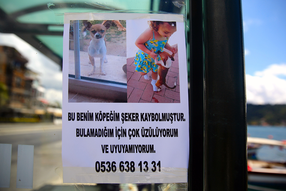 #201 —Arnavutköy - 