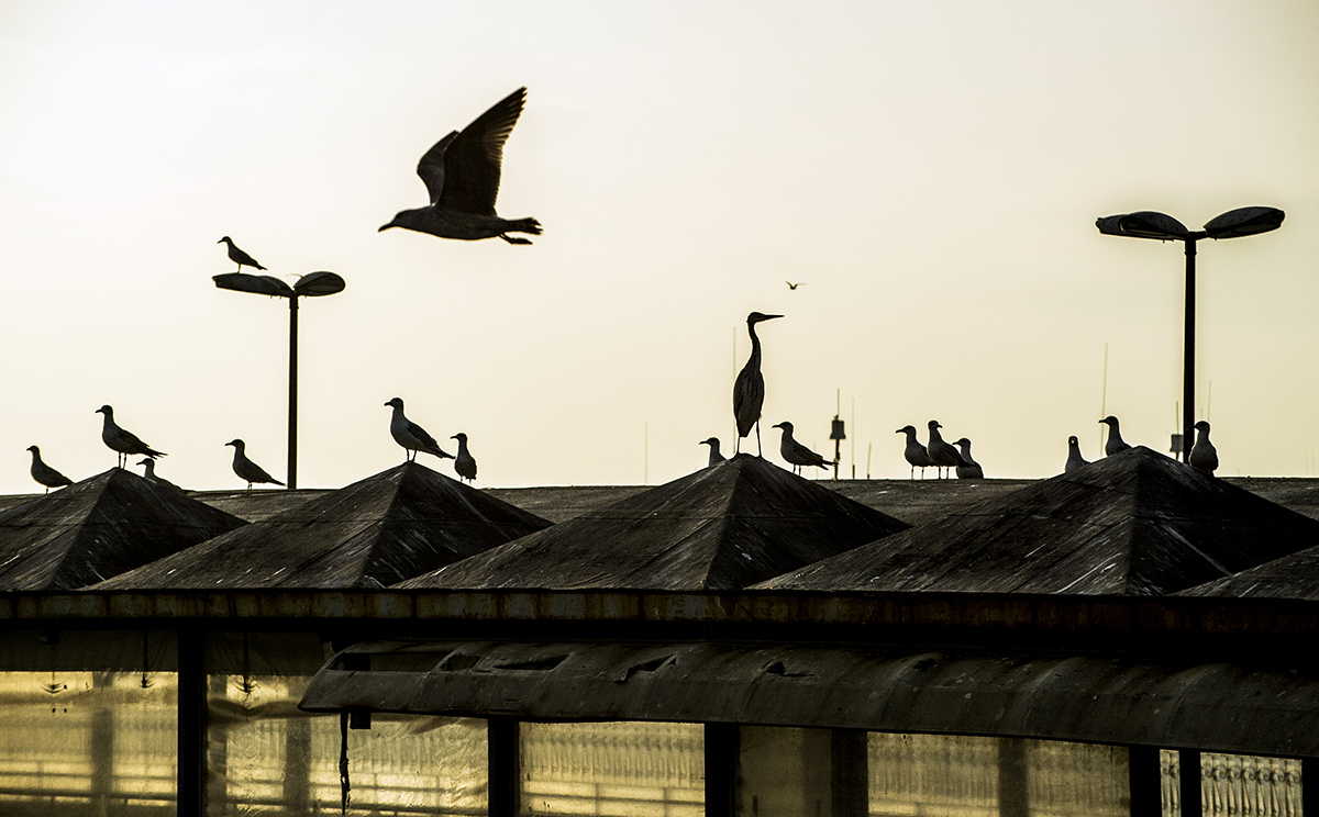 #310 —Bostancı –