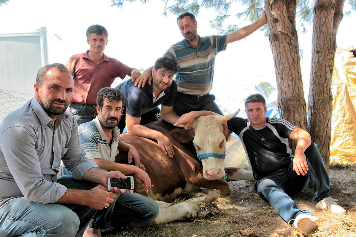Day 254 —Pendik - 